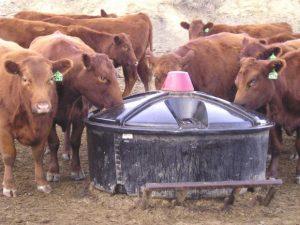 液体动物饲料混合